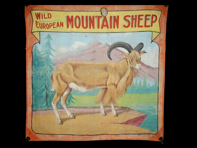 mountain sheep sideshow banner by Fred G. Johnson