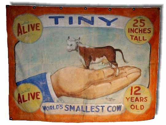 Tiny world's smallest cow sideshow banner by Fred G. Johnson