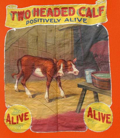 2 headed calf sideshow banner by Fred G. Johnson