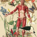 Juan Gatti Ciencias Naturales anatomical collage art painting