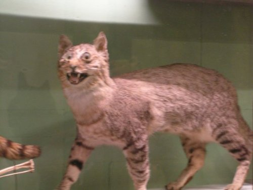 bad-taxidermy-cat