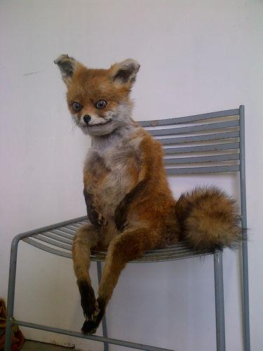 bad-taxidermy-fox