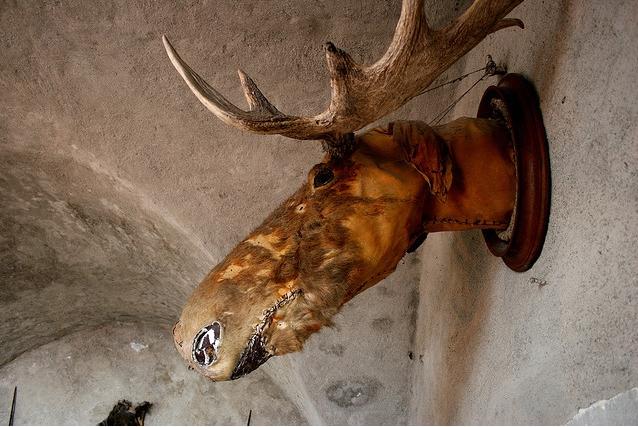 bad-taxidermy-moose