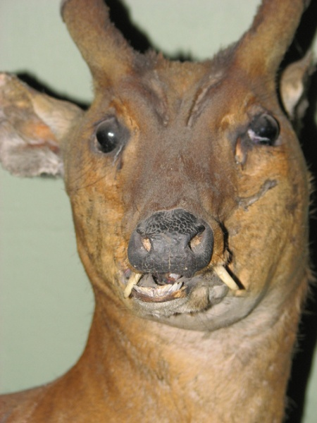 bad-taxidermy