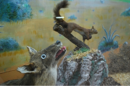 badtaxidermy14