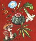 golden-guide-hallucinogenic-plants