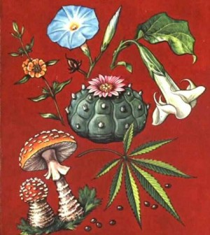 Magic mushrooms and the roots of witchcraft