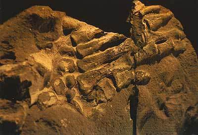Prehistoric human hand fossil found in ancient rock