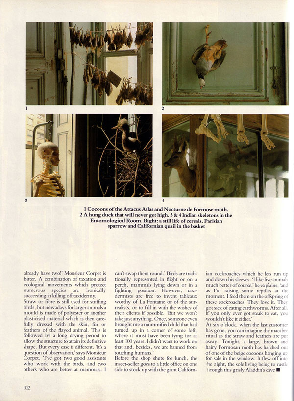 Birds and human bones hang in the Entomological Room