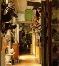 deyrolle-taxidermy-paris