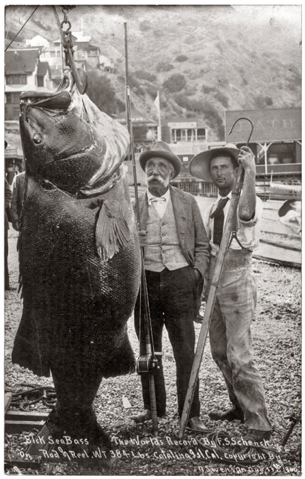 world-record-bass-1900