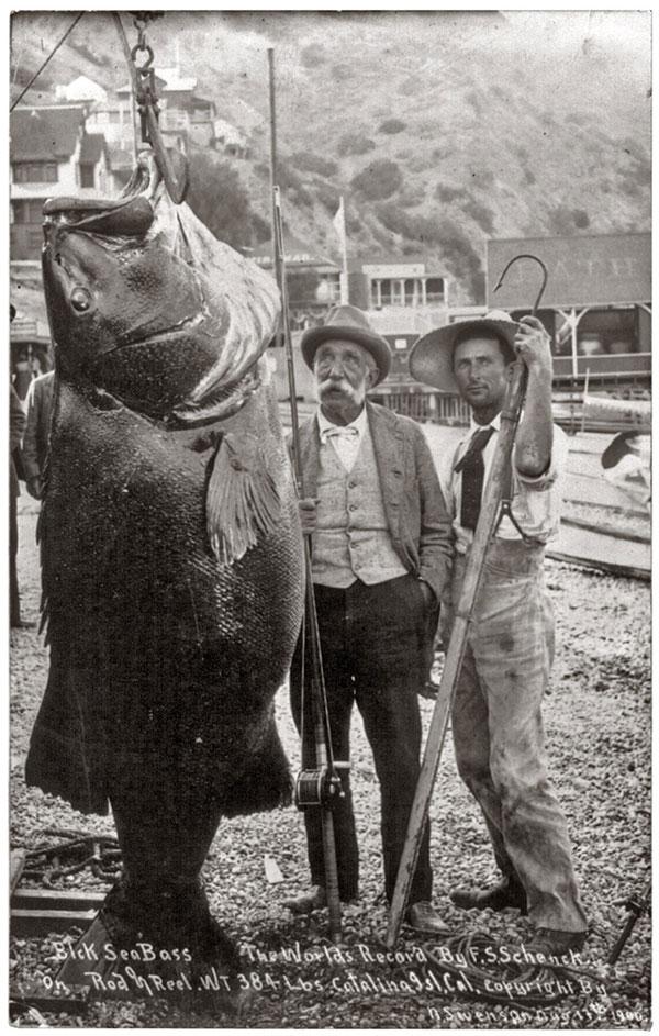 world-record-bass-1900