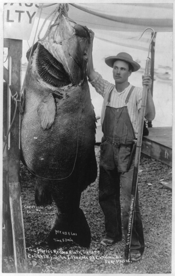 world-record-bass-1905