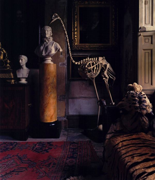 Articulated ostrich skeleton on display in the Malplaquet House