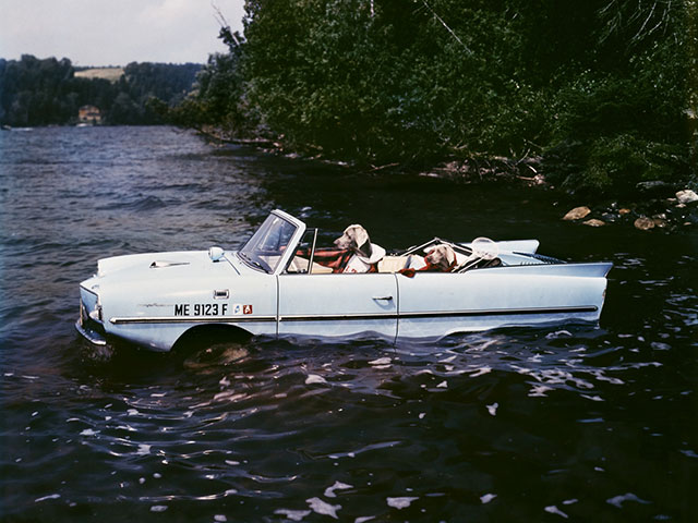 Dogs in an Amphicar