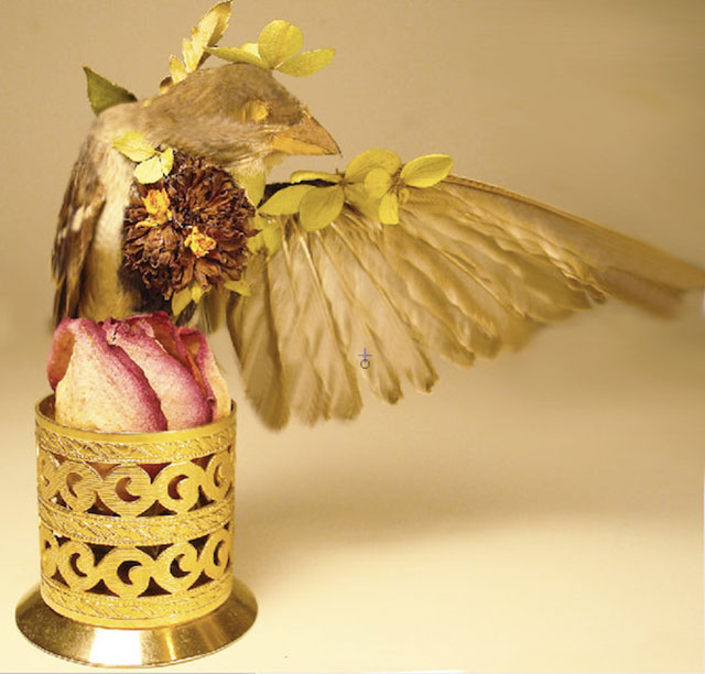 Blooming sparrow taxidermy by Divya