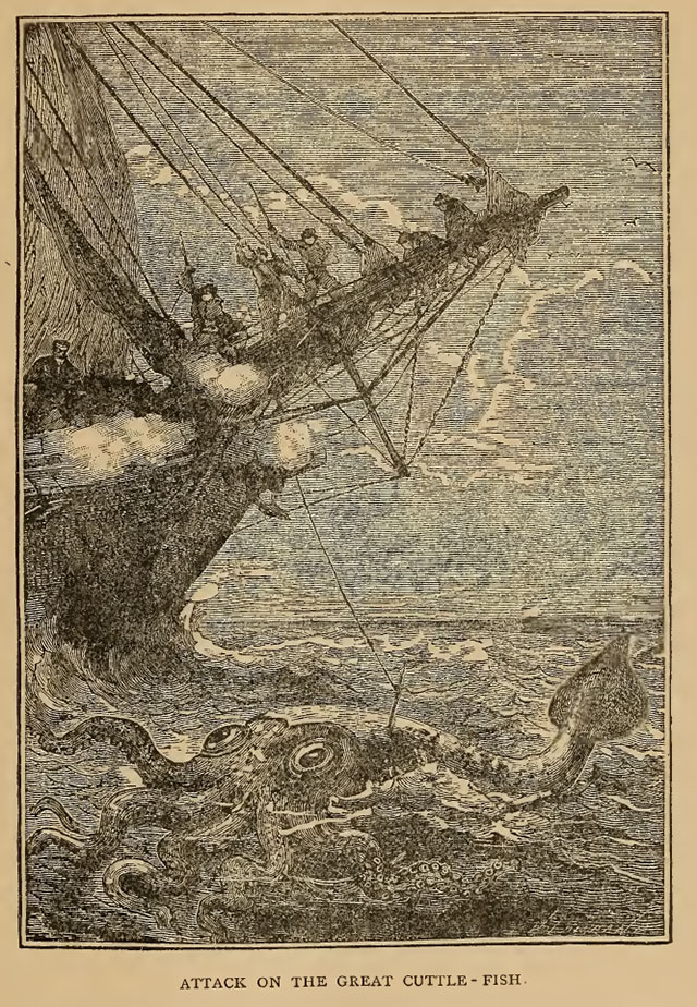The Alecto tries to capture a cuttle-fish in 1861