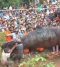 giant-worm-vietnam