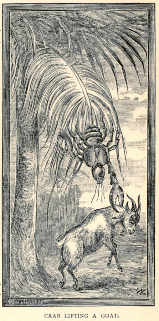 Illustration from J.W. Buel's book Land and Sea depicting a crab lifting a goat