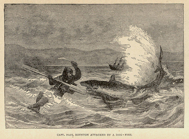 Dog fish attack