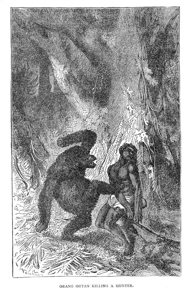 Hunter attacked by orangutan