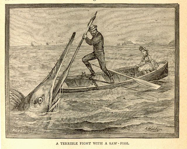 A man battles a saw fish
