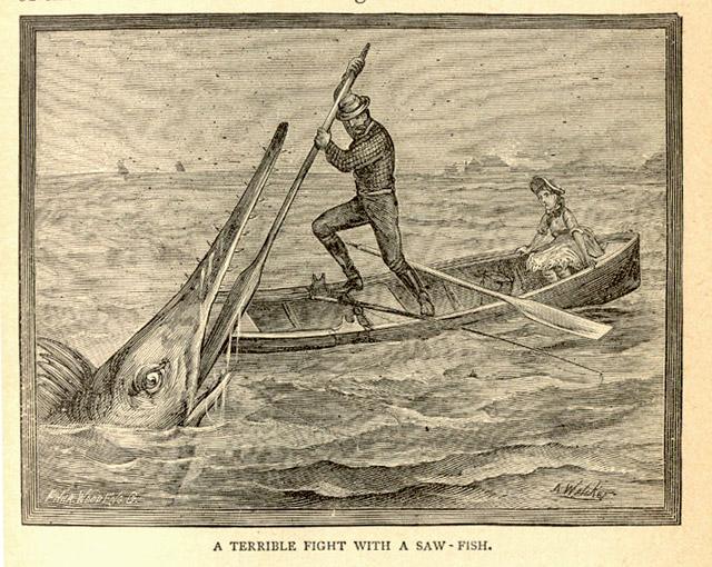 A man battles a saw fish