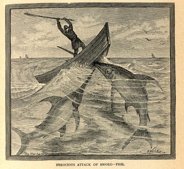 Sword fish attack