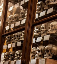 mutter-museum-hyrtl-skulls-sm