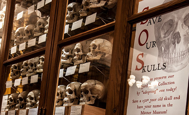 Adopt a skull from the Mutter Museum's Hyrtl collection