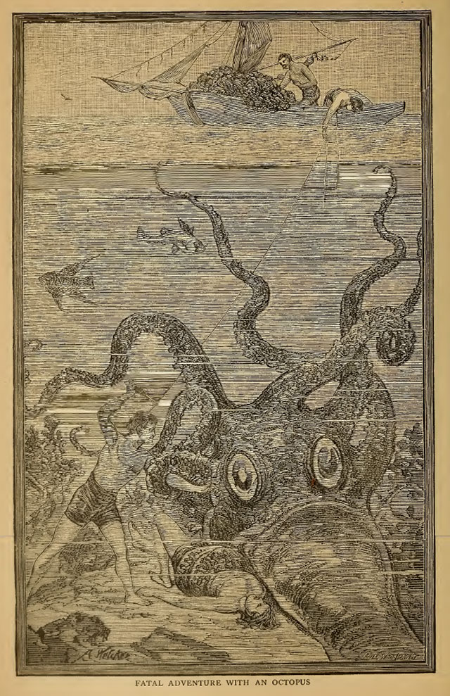 Fatal adventure with an octopus