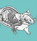 how-to-taxidermy-mouse-sm