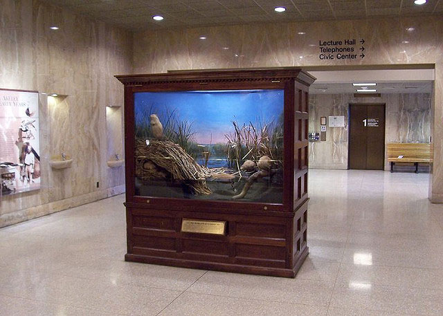 Taxidermist Carl Akeley created the muskrats, the world's first habitat diorama, in 1890 at the Milwaukee Public Museum