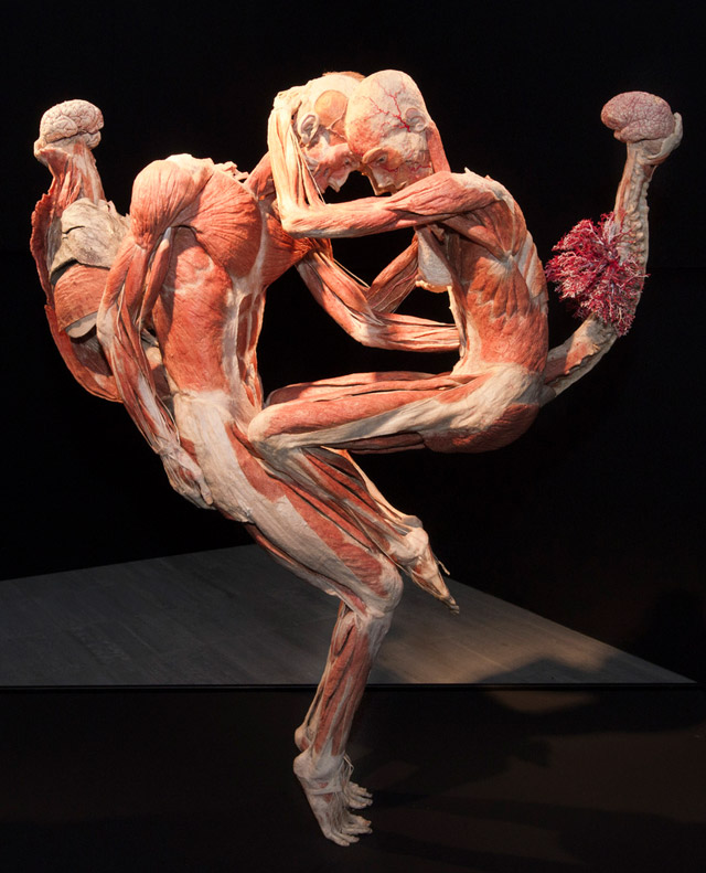 A plastinated couple for Body Worlds Story of the Heart