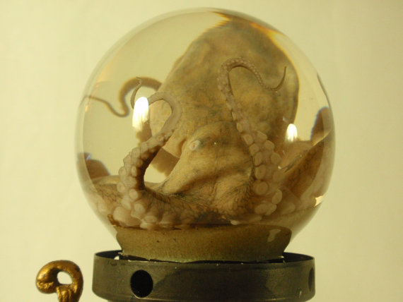 Octopus wet specimen in glass sphere