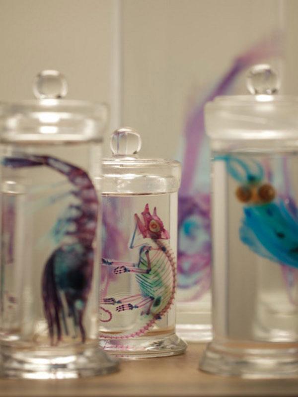 Diaphonized wet specimens