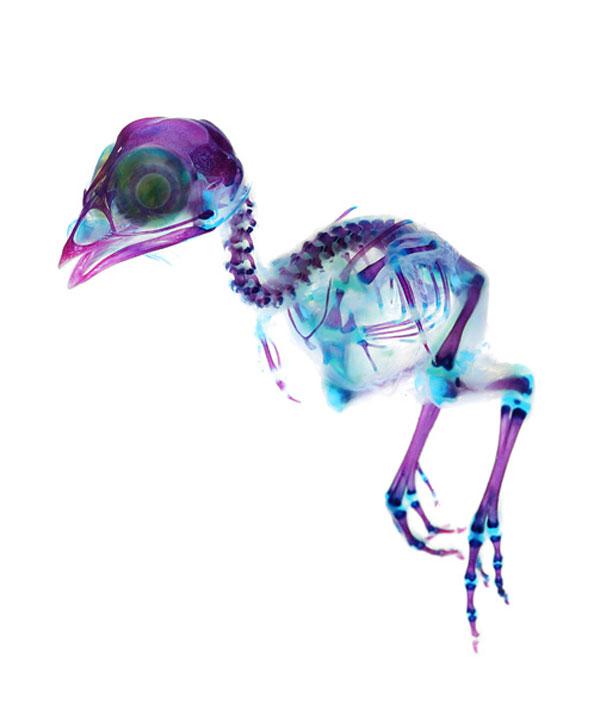 Diaphonized bird specimen