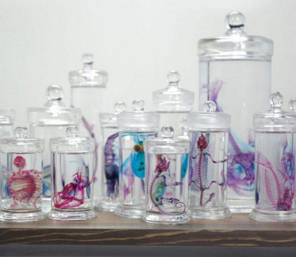 Diaphonized specimens in jars