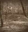 lizard-mound-skeleton-sm