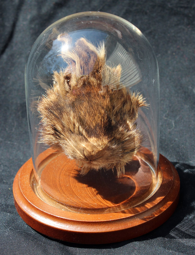 Shrunken rabbit head by Afterlife Anatomy