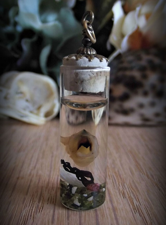 Squid beak wet specimen by silentcheesecake designs