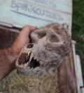 werewolf-skull-sm