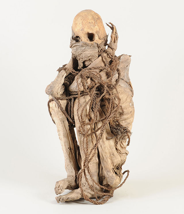 Mummy of a 12th century Incan nobelman on display at the Cotton to Gold exhibition in London