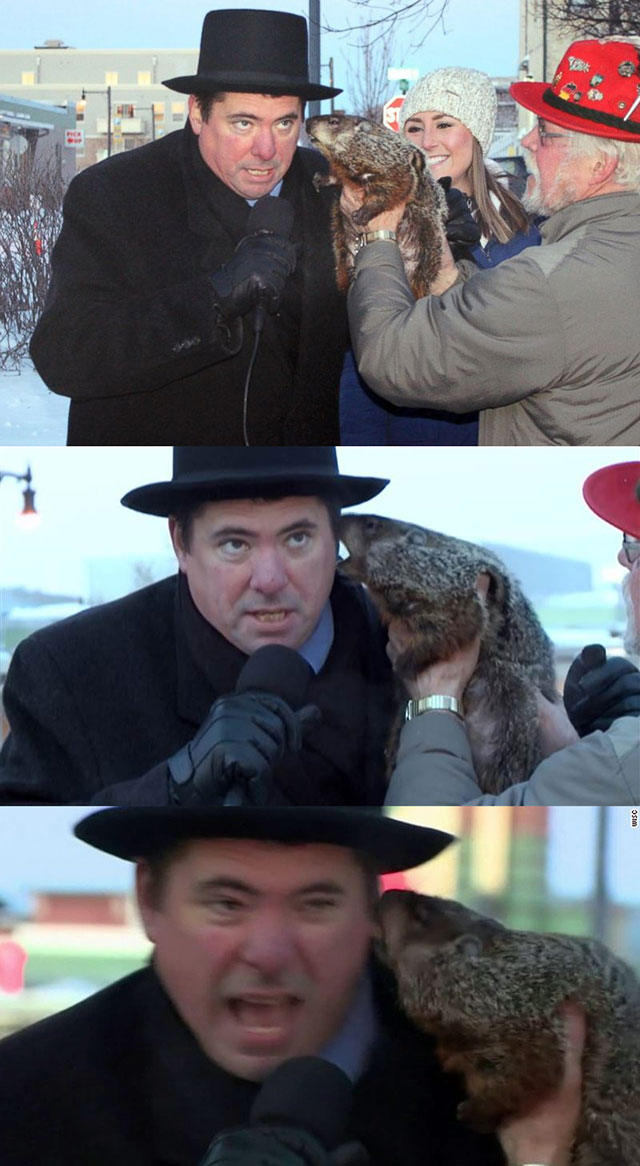 Wisconsin groundhog bites mayor on live TV