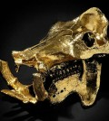 gold-plated-hippo-skull-sm