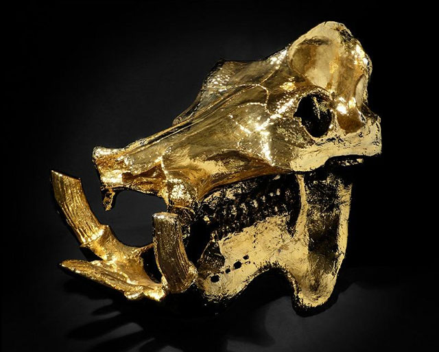 Pablo Escobar's gold-plated hippo skull in the Hanbury Collection