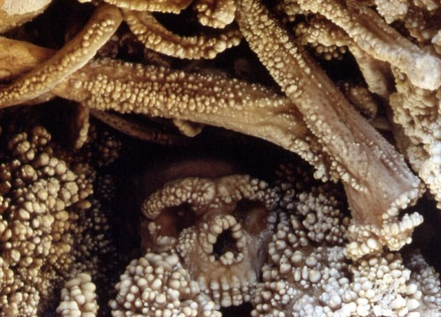 The ancient Neanderthal remains of the Altamura Man stuck in stone in a cave in Italy