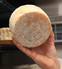 human-toe-bacteria-cheese