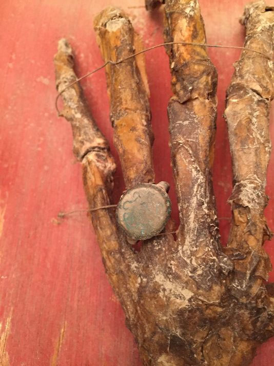 Mummified pirate hand found in Tampa Bay attic may belong to Jose Gaspar