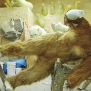 Stuffed Bigfoot - Ken Walker works on his sasquatch taxidermy